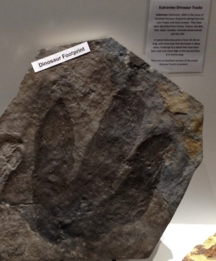 Dinosaur footprint in  Dove and Lyre shop