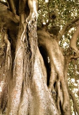 Sally Swain tree