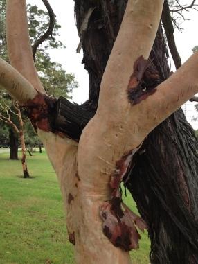 Tree Truth 2