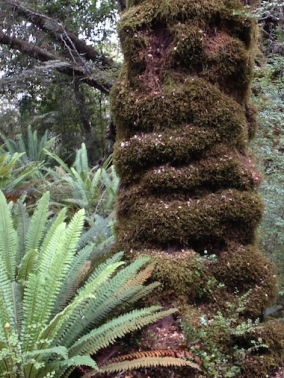Ribbed tree life. What causes this amazing ribbed growth?