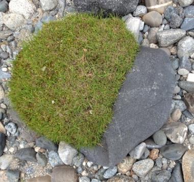 Half-heart