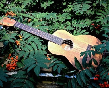 Random Acts of Travelling Sculpture Uke and that gorgeous orange/scarlet berry tree which I couldn't identify. Can you help? Sally Swain
