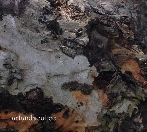 Sally Swain tree texture