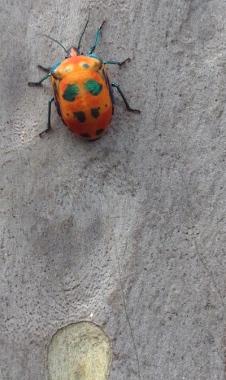 amazing beetle city photo