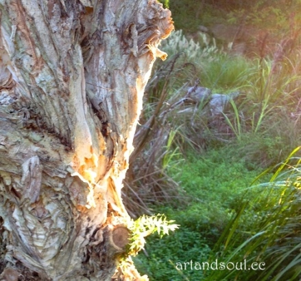 autumn light paperbark