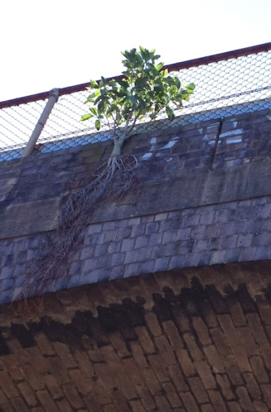 tree resilience aqueduct
