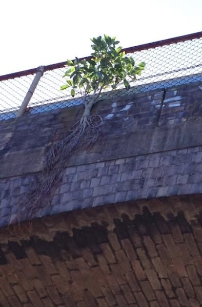 tree resilience aqueduct
