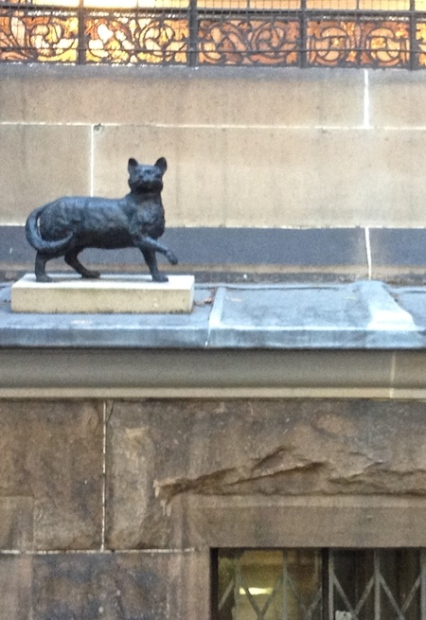 Matthew Flinders cat