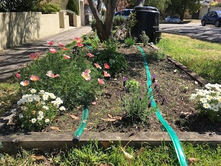 veggie garden photo