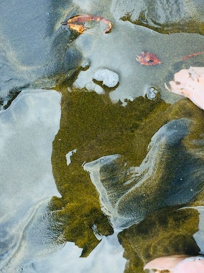 mystery nature photo art