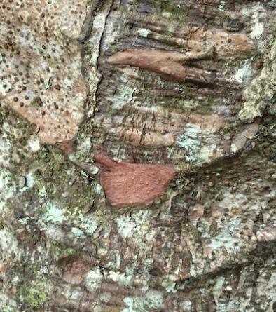 inspiring tree texture