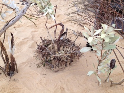 egret driftwood beach installation