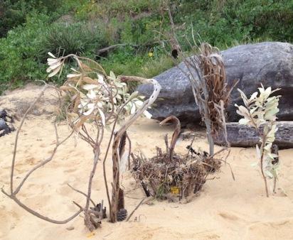 beach sculpture Swain