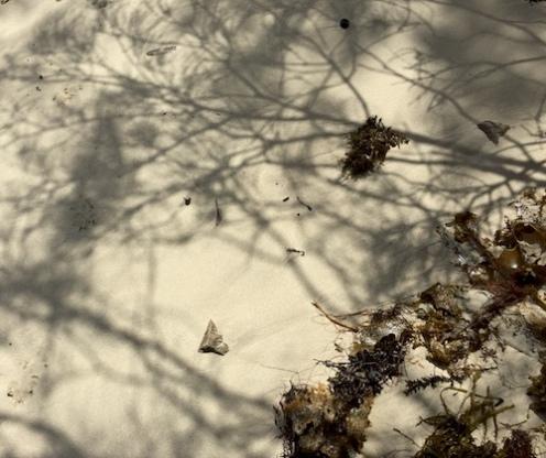 seaweed art shadow