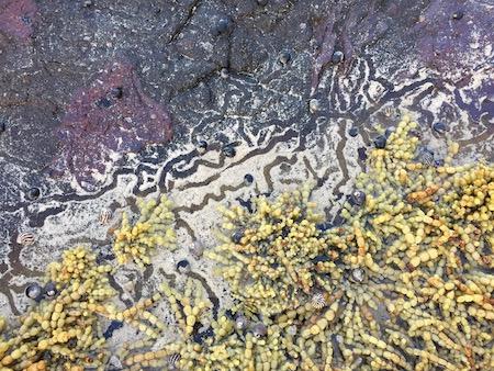 rockpool texture art photo