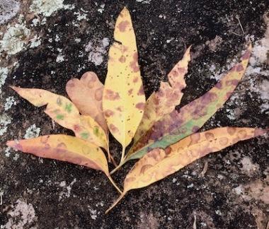leaf art rock nature Swain