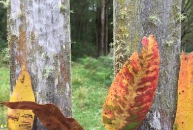 art leaf shape