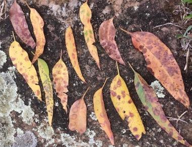 art rock leaf pattern