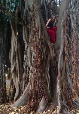 tree climb photo