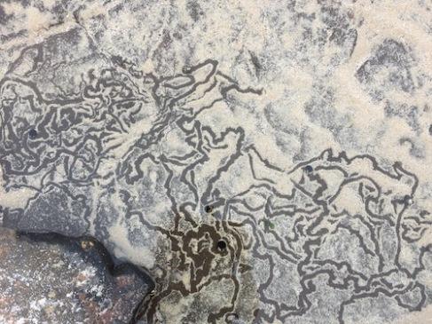 nature art scribble